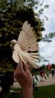 Mr Sinclairs's Birds catching flight at Hobbledown Adventure